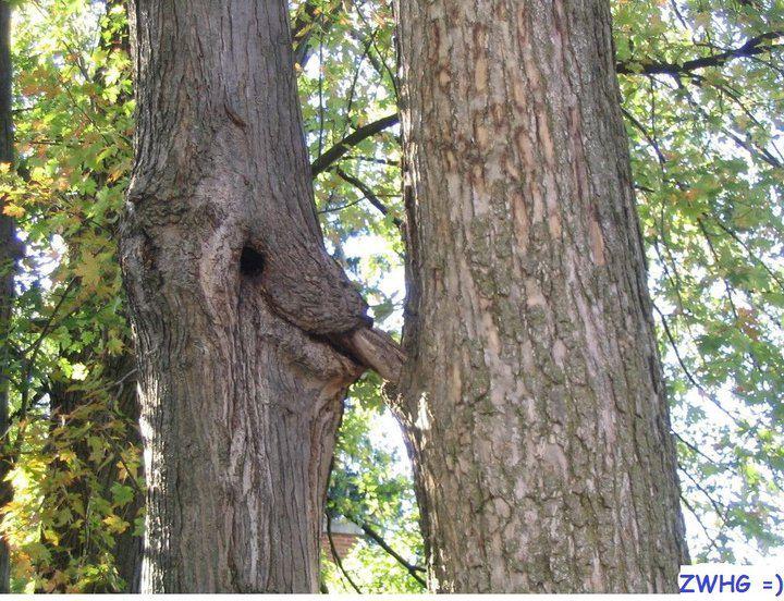 Name:  Tree head.jpg Views: 189 Size:  118.9 KB